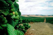 Inside Menfishire / This is a short but amazing journey inside an unspoiled area in the south west of Sicily. Here in Menfi you will discover wild landscapes, beautiful vineyards and amazing people.