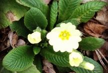 Monferrato Flowers / The Beauty is a simple flower