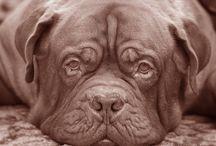 Pejskové/dogs