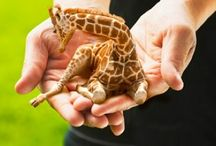 I Want One! / by Karen Diebolt