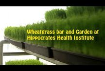 Hippocrates Health Institute / The World Famous raw food health spa, Hippocrates Health Institute