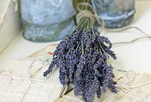 lavenders blue dilly dilly.....lavenders blue.... / by Ilsé McCarthy