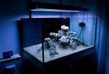 Reef Aquascape