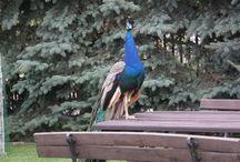 Ptaki / Przyjemność fotografowania tych pięknych stworzeń....