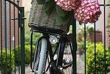 ΠΟΔΗΛΑΤΑ-Bicycles