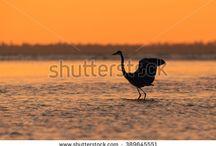Florida Beach photos