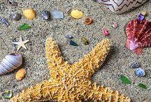 ~ Sea Shells... Starfish...The Seashore ~ / by Robin Wheeler Lockbeam