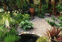 vasca x piante acquatiche