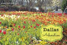 Dallas Fort Worth / things to do and see in Dallas Fort Worth / by Jamie Roubinek | Roubinek Reality blog