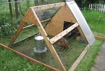 Chickens and Bees