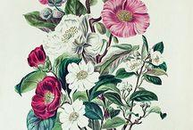 Botanical / by Sebastián Scavone