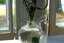 In glas