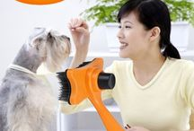 dogs groomer