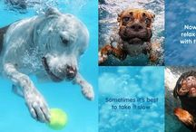 UNDERWATER PUPPIES / Images of dogs under water...hysterical!