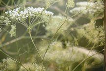 listki, kwiaty i roślinki