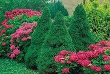 Planter i hagen