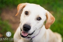 How to Photograph Pets / Pet Photography Pros Share Tips for Taking Great #PetPhotos #AnimalRescue #PetsAreFamily