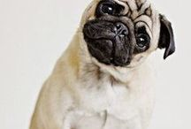 Dogs / Lovely and Cute dogs and puppies of all shapes and sizes