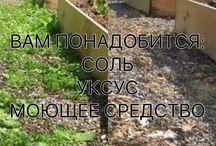 Сад борьба с сорниками