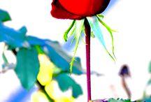 Virágok / Az a virág, amely a szívből nyílik nem hervad el soha, ahogy a szeretet sem múlik el, ha lélek az otthona. Hiszen a szeretet nem más, mint a lélekből sarjadt virág: láthatatlan, és mégis érzed rejtélyes illatát. Láthatatlan. Csak akkor látni, ha szemed mosolyog, s felragyognak szirmai közt csillagharmatok
