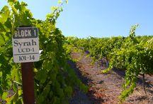 Vines & Vineyards