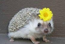 Animaladas / Imágenes divertidas de nuestros amigos los animales  Humor