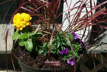 Healthy Garden / Gardening ideas for all natural gardens.