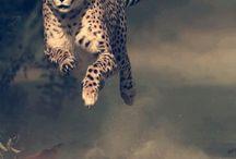 Amazing Animals @ Gazuntai.com