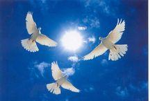 Symbols of peace♡♡♡