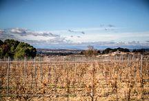Domaine de Campaucels / Les images du domaine de Campaucels et Cathy Do vigneronne à Montagnac - Languedoc