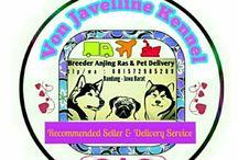 Stok Anjing Ras Von Javelline Kennel