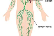 Health Lymphatic System