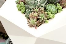 Easy Patio Plant Ideas