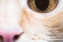 gatos - fotos