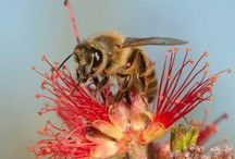 pszczoły,trzmiele i inne zapylacze