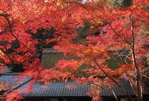 Japanese Autumn Foliage
