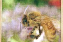 My Bee Art / My love of beez
