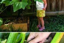 Выращивание Цуккини