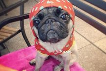 Pugs and other mega cuteness