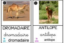 ANIMAUX AFRIQUE
