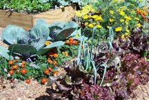 Vegetable Gardening / Plants, products, tips and techniques for growing delicious and nutritious veggies.