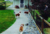 Hundar i trädgården