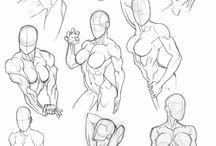 Anatomia & Estética