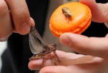 Insecte gastronomie