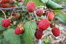 Frutas de Santander