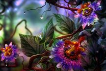 Flowers / květiny a rostliny
