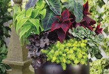 Outdoor Planter Pots