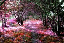Tajomné záhrady / Mysterious Gardens