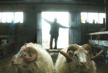 Rams film