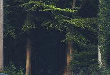 BOSQUES / Fotografías de bosques que ofrecen la belleza de ese tipo de lugares, en cuyas imágenes se encuentra el esplendor del mundo natural.